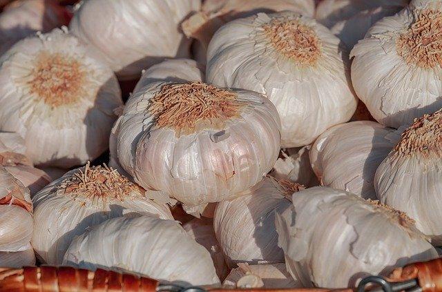 Freshly harvested garlic from the garden.